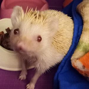 Hollie the hedgehog